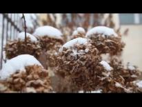 2016.02.02 Zima w ogródku